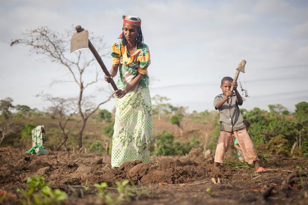 Cameroonian woman cultivating the land thanks to training providing by SOLIDARITÉS INTERNATIONAL